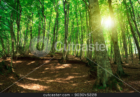 Green forest stock photo, Green forest in Gambarie d'Aspromonte of Calabria Italy, with sunflare by Natalia Macheda