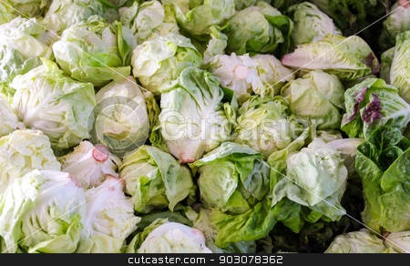 Iceberg Lettuce stock photo, Pile of green iceberg lettuce at a farmers market. by Henrik Lehnerer