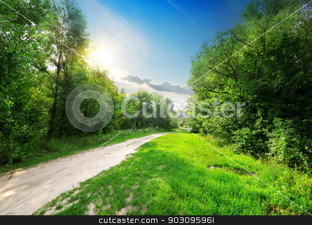 Country road into forest stock photo, Country road into the beautiful spring forest by Givaga