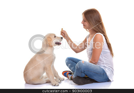 owner training puppy dog stock photo, owner training puppy dog with treat by mandygodbehear
