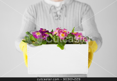 man holding  big pot with flowers stock photo, close up of man holding  big pot with flowers by Syda Productions