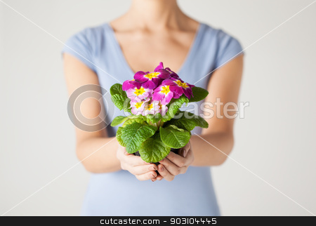 woman's hands holding flower in pot stock photo, close up of woman's hands holding flower in pot by Syda Productions