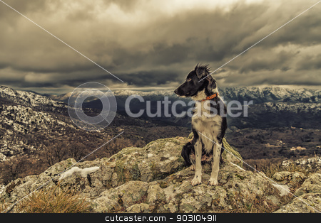 Border Collie dog sitting on rock with snow covered mountains in stock photo, A border collie dog is sitting on a rocky outcrop with snow covered mountains in the distance by Jon Ingall