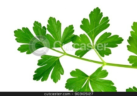 Parsley stock photo, Closeup of parsley leaves on a white background. by crspix