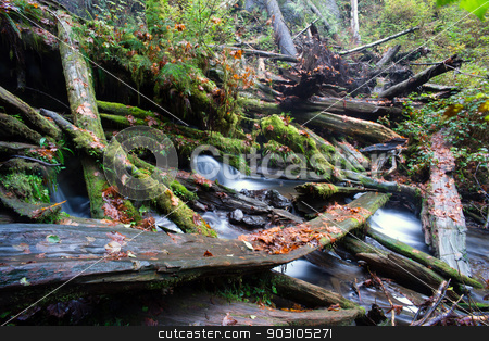 Rain Forest Stream Covered Fallen Logs Woods Jungle Outback Travel stock photo, A stream makes it's way through the fallen trees in the forest by Christopher Boswell