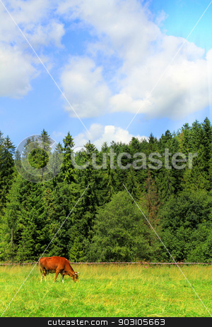 Cow on green grass and blue sky with light  stock photo, Cow on green grass and blue sky with light  by Jacky Brown