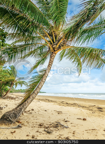 Palm trees stock photo, An image of a nice beach with palm trees by Markus Gann