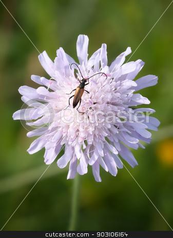 a bug on a flower stock photo, An image of a bug on a flower by Markus Gann