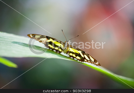 Papilionidae stock photo, An image of a nice butterfly - Papilionidae by Markus Gann