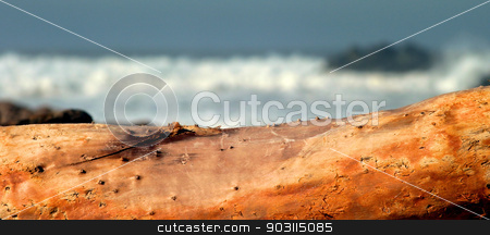 Drift Wood stock photo, Drift Wood with stormy ocean waves in the background. by Henrik Lehnerer