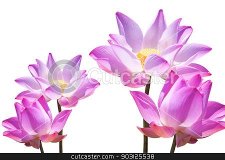 Lotus stock photo, Lotus buds Lotus flower and Lotus flower plants. by janniwet