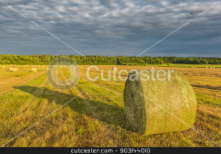 Yellow hay in a field stock photo, Many big yellow hays in an enormous field on a beautiful sunset in the autumn, in Ontario, Canada. by Peter Kolomatski