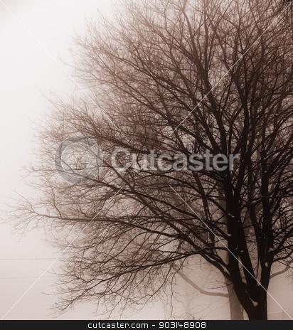 Leafless tree in fog stock photo, Foggy winter scene of single leafless tree in fog by Elena Elisseeva