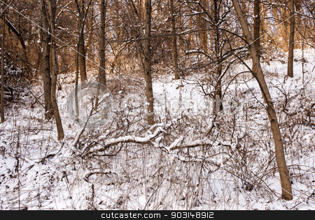 Winter forest stock photo, Winter landscape of trees and plants in forest with snow by Elena Elisseeva