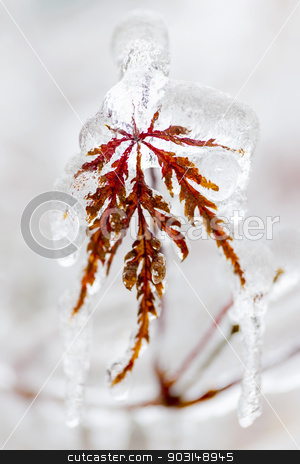 Icy winter leaf stock photo, Tree leaf covered in ice and icicles during winter by Elena Elisseeva