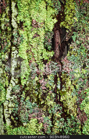 Lichen on tree trunk stock photo, Multicolored lichens growing on bark of tree trunk closeup by Elena Elisseeva