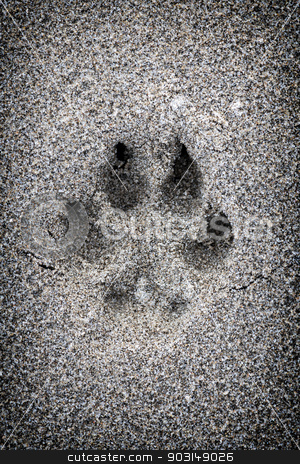 Paw print in sand stock photo, Closeup of dog paw print in sand by Elena Elisseeva