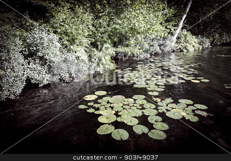 Lily pads at lake shore stock photo, Lily pads floating on dark water near lake shore by Elena Elisseeva