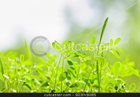 Green sprouts stock photo, Closeup of green young sprouts growing in garden by Elena Elisseeva