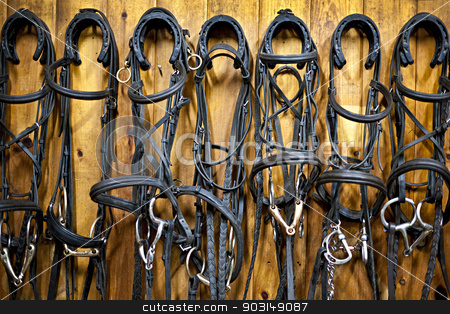Horse bridles hanging in stable stock photo, Leather horse bridles and bits hanging on wall of stable by Elena Elisseeva