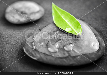 Stones with green leaf stock photo, Black and white zen stones submerged in water with color accented green leaf by Elena Elisseeva