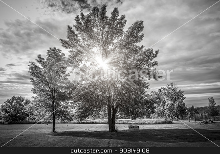 Landscape with sun shining though trees stock photo, Black and white landscape with sun shining though tree branches in park by Elena Elisseeva