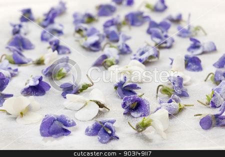 Candied violets stock photo, Candied sugared violet flowers drying on parchment paper by Elena Elisseeva