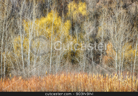 Forest in late fall at Scarborough Bluffs stock photo, Late autumn forest at Scarborough Bluffs in Toronto, Canada. by Elena Elisseeva