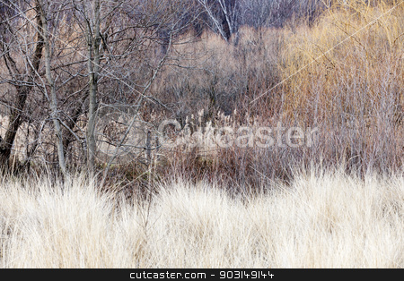Winter woodland background stock photo, Background nature landscape of bare trees and grasses in winter ravine by Elena Elisseeva
