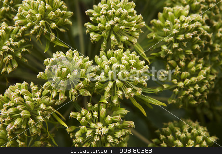 Iceland. Green plants close up. stock photo, Green plants close up. Iceland. Horizontal. by ABBPhoto