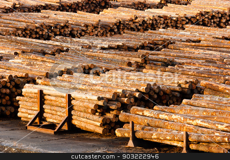 Log Ends Wood Rounds Cut Measured Tree Trunks Lumber Mill stock photo, Wood already taken from the forest waits for transport by Christopher Boswell
