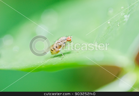 fly in green nature stock photo, fly in green nature or in the city or food by sweetcrisis