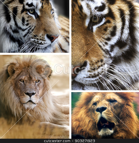 Big cats collage stock photo, Big cats collage by Emilia Ungur