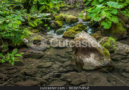creek and lush vegetation stock photo, creek and lush vegetation in the forest by Karol Czinege