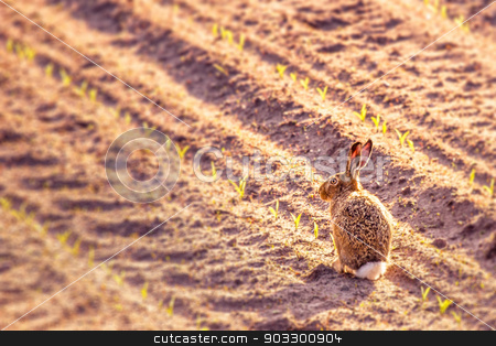 Cute little hare in a kitchen garden stock photo, High resolution photo in best quality by Kasper Nymann