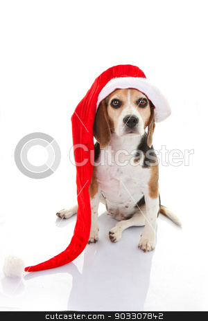 pet dog christmas holiday gift or present stock photo, pet dog christmas holiday gift or present in santa hat by mandygodbehear
