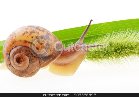Snail on a green leaf  stock photo, Small brown snail on a green bristle leaf  by John Young