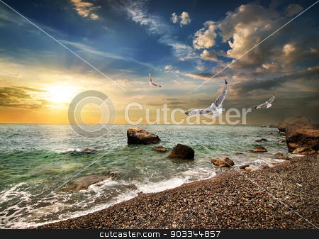Seagull over sea stock photo, Seagull over the sea in the mountains by Givaga