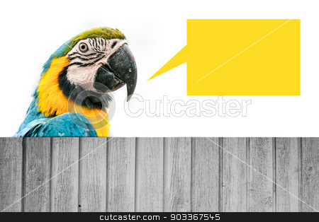 Macaw parrot wit ha speech bubble stock photo, Portrait of a macaw parrot isolated on white by Kasper Nymann