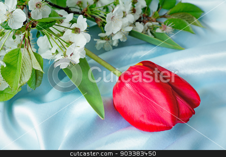 Bright red tulip against blue silk stock photo, One big beautiful tulip of bright red color with green leaves against blue silk by Georgina198
