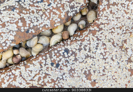 Cluster of seashells stock photo, Cluster of seashells on a stone at the sea by michaklootwijk