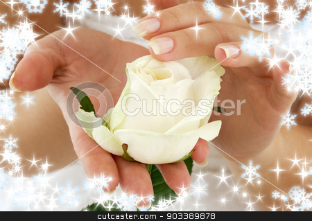 rosebud with snowflakes stock photo, beautiful woman hands with rosebud and snowflakes by Syda Productions