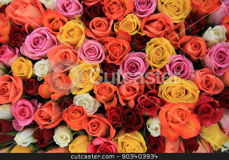 Multicolored wedding roses stock photo, Multicored wedding roses: a mix of orange, red, pink and white by Porto Sabbia