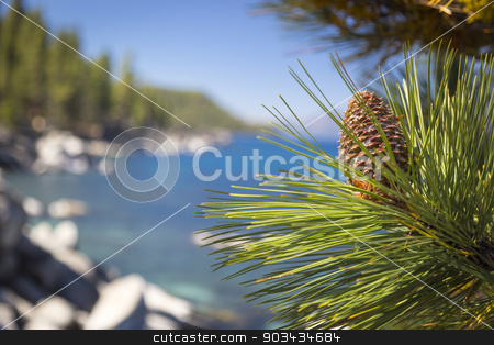 Beautiful Pine Cone on Tree Near Lake Shore stock photo, Beautiful Pine Cone on Tree Branch Near Mountain Lake Shore. by Andy Dean