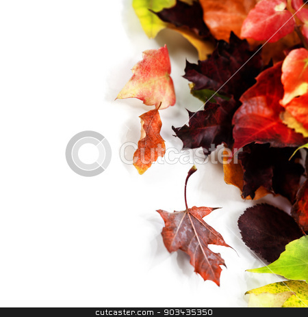 Autumn Leaves  stock photo, Autumn Leaves on white background by klenova