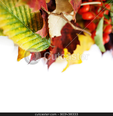 Autumn Leaves  stock photo, Autumn Leaves on white background by klenova