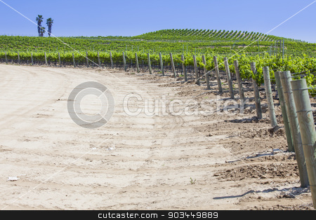 Beautiful Lush Grape Vineyard with Room For Text stock photo, Beautiful Lush Grape Vineyard In The Sun with Room for Your Own Text. by Andy Dean