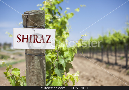 Shiraz Sign On Vineyard Post stock photo, Shiraz Sign On Post at the End of a Vineyard Row of Grapes. by Andy Dean