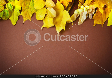 autumn leaves stock photo, different autumn leaves on a brown background. autumn backgrounds.space for text by Jevgeni Proshin