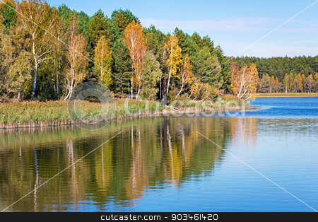 The autumn wood on the bank of the big beautiful lake stock photo, On the shore of a large lake with trees with yellow leaves. The crowns of trees reflected in the water. by Georgina198